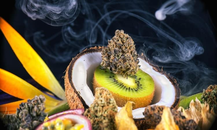 Terpene-Infused Cannabis Products: A Symphony for the Senses